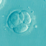 Frozen Embryos Custody Dispute